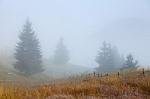 Paisaje con niebla