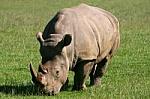 Foto de Rinoceronte