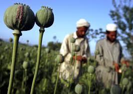 cultivo de opio