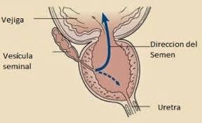 eyaculación masculina