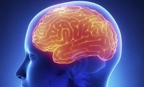 hemisferio cerebral
