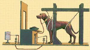 reflejo condicionado en un perro
