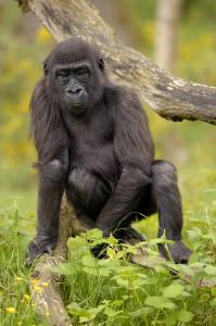 Imagen de un mono